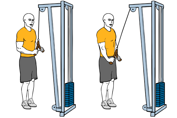 Triceps cable rope push down